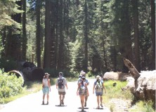 Nature Walk in Yosemite