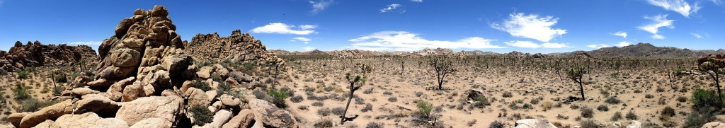 Joshua_Tree_Panorama